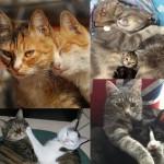 couverture de « Recettes pour deux chats heureux … ou comment réussir leur cohabitation » sur laVieDesChats.com