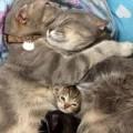cohabitation entre chats réussie sur laVieDesChats.com