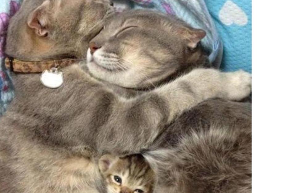 deux chats heureux sur laVieDesChats.com