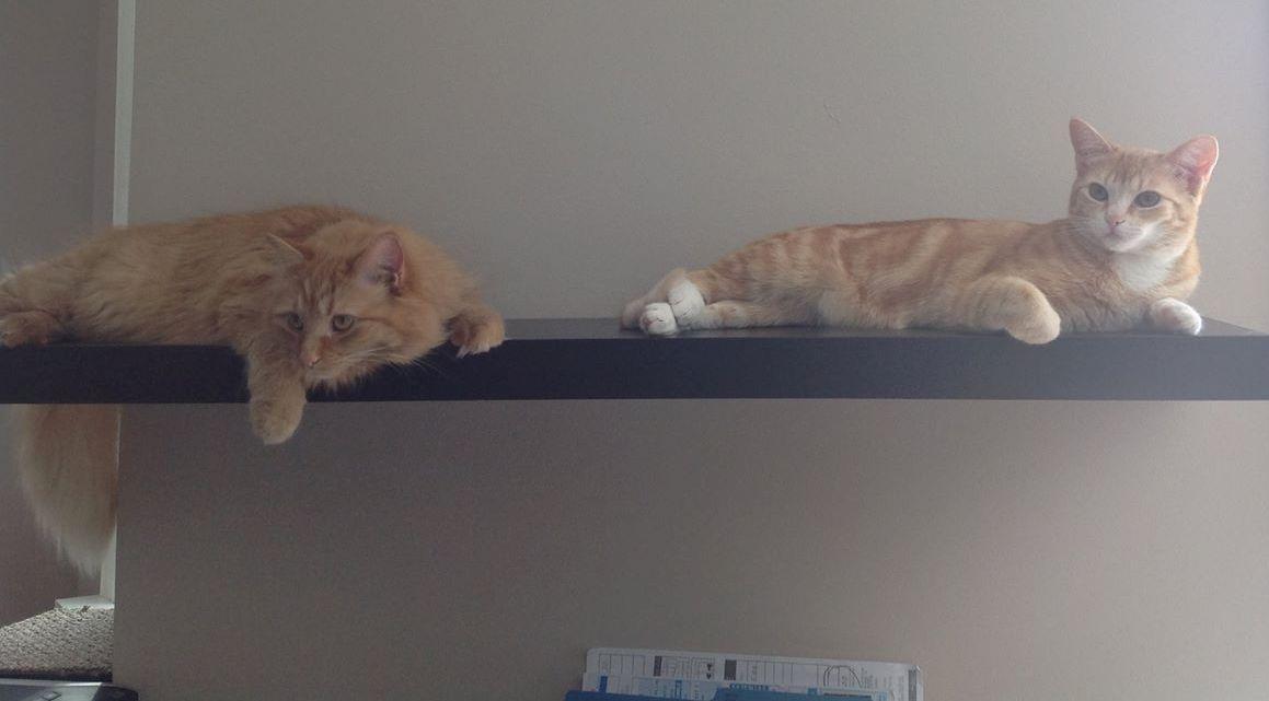 Habituer un chat a une nouvelle maison ventana blog for Adaptation chat nouvelle maison