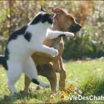 cohabitation chien chat, vos questions ici sur laVieDesChats.com