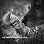cohabitation chien chat sur laVieDesChats.com
