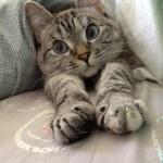 jeune chat attaque un chien sur laVieDesChats.com