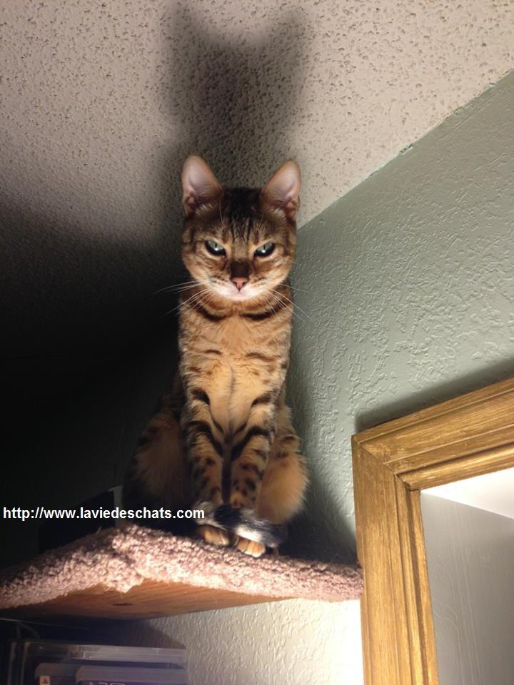 problème d'entente entre chat et chien sur laVieDesChats.com
