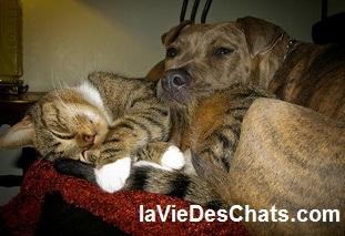 american staff et chat sur laVieDesChats.com