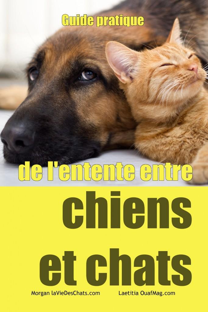 guide de l'entente entre chiens et chats sur laVieDesChats.com