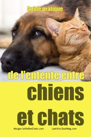 Guide pratique de l'entente entre chiens et chats sur laVieDesChats.com