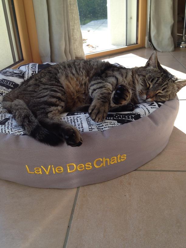 adoption du grand pouf de confort par Garfield sur laVieDesChats.com
