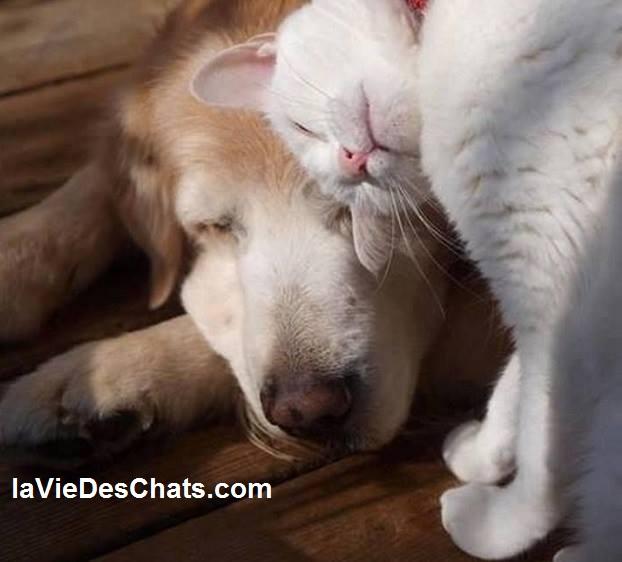 entente entre chien et chat sur laVieDesChats.com