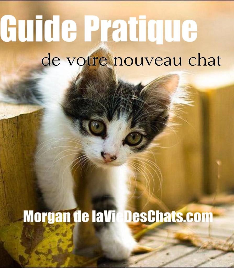 guide pratique de votre nouveau chat