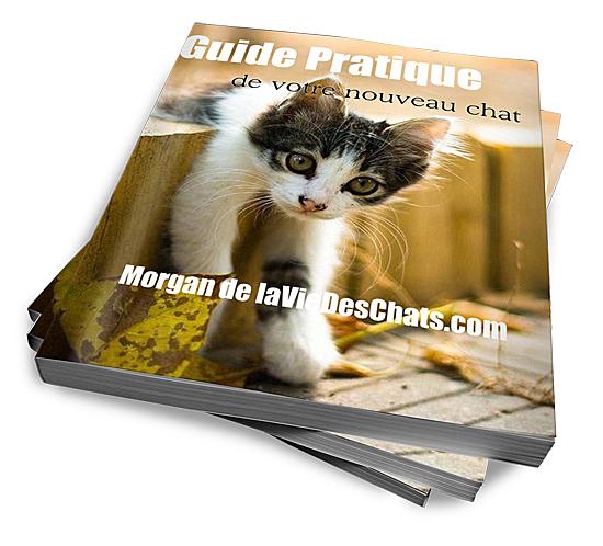 guide pratique de votre nouveau chat 3d