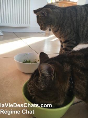 régime chat en 5 étapes