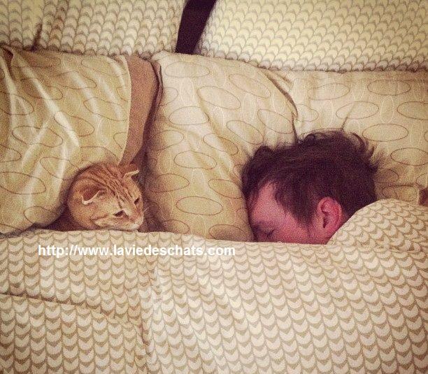 pipi de chat sur le lit