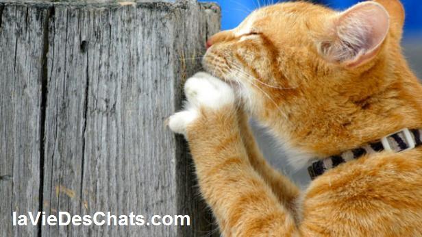 un chat fait ses griffes sur un poteau