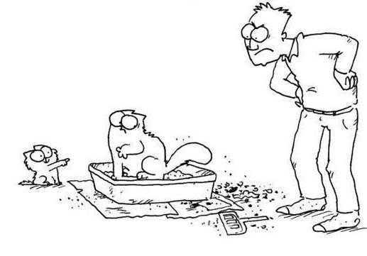 chat ne fait plus pipi dans la litière