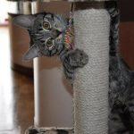 chat joue sur un griffoir