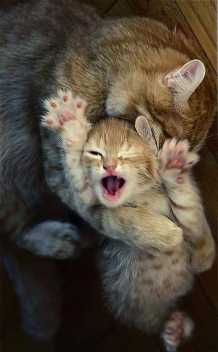 chaton qui ne cesse de mordre et griffer les chevilles