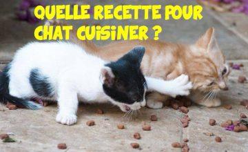 recette pour chat