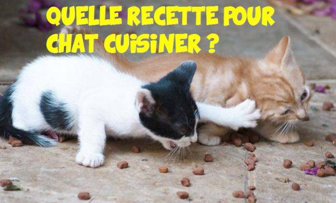 Quelle Recette Pour Chat Cuisiner Vous M 234 Me La Vie Des Chats