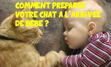 chat à l'arrivée de votre bébé