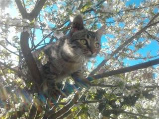 chat d'alexandra d'animalkeepers