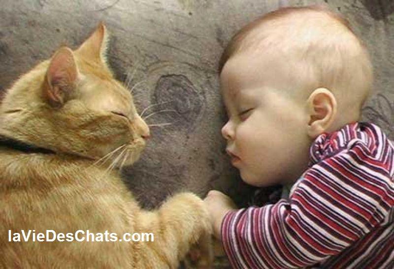 preparer un chat à l'arrivée de votre bébé