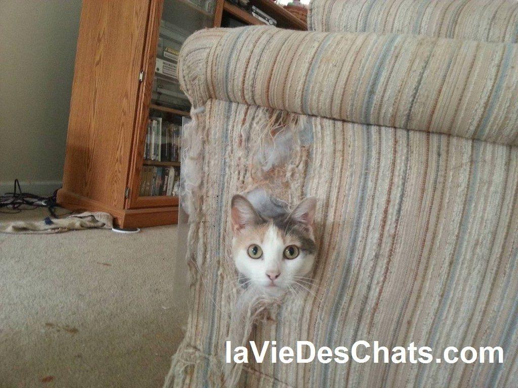 comment dissuader un chat de faire ses griffes sur un canapé
