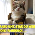 Maru une star du web