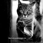 des chats disparus sont retrouvés par miracle