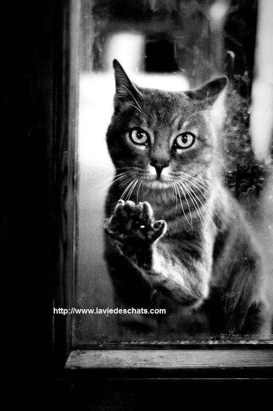 Voici comment des chats disparus sont retrouv s - Retour de couche au bout de combien de temps ...
