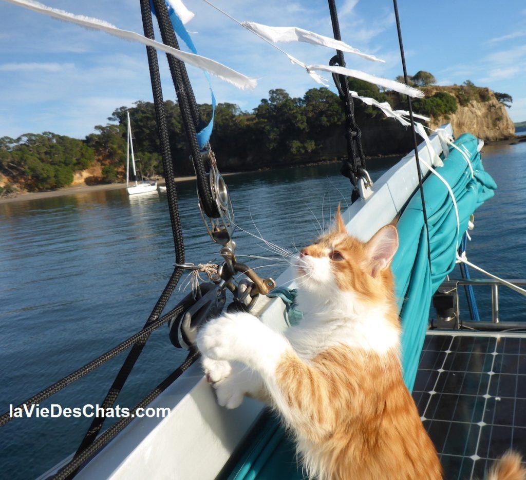 belle histoire du chat Maine Coon et de son maître sourd