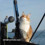 portrait du chat Maine Coon et de son maître sourd