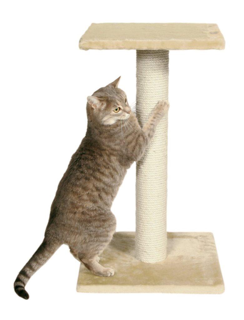 petit arbre à chats