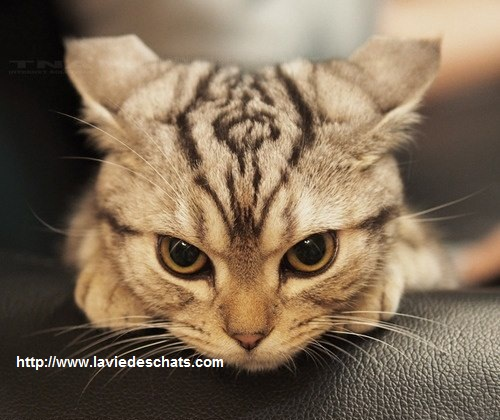 présenter un nouveau chat