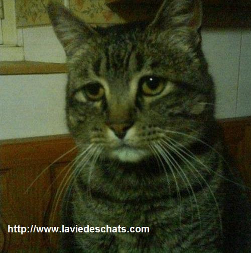 A la première rencontre entre chats , l'un peut être triste