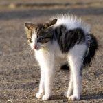 introduction d'un nouveau chat