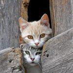 première rencontre entre chats