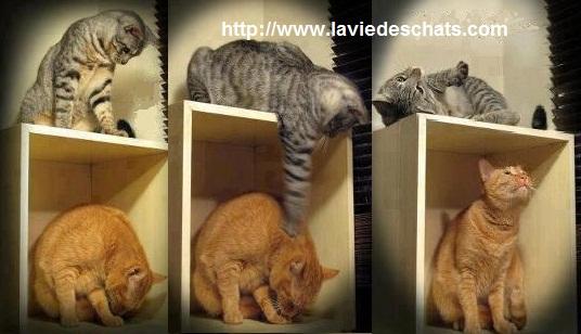A la première rencontre entre chats , le jeu peut rapprocher