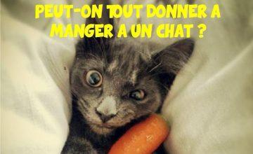 Peut-on tout donner à manger à un chat