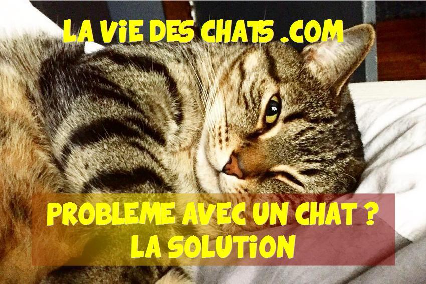 Abonnez-vous à laVieDesChats.com