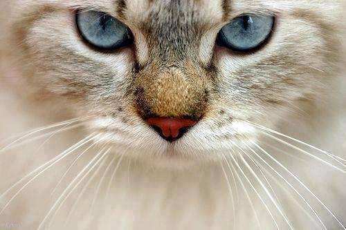 Mon chat a des vers