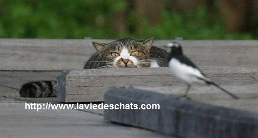 dissuader mon chat de chasser les oiseaux