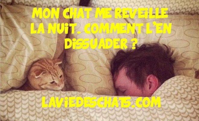 Mon Chat Me R 233 Veille La Nuit Comment L En Dissuader La