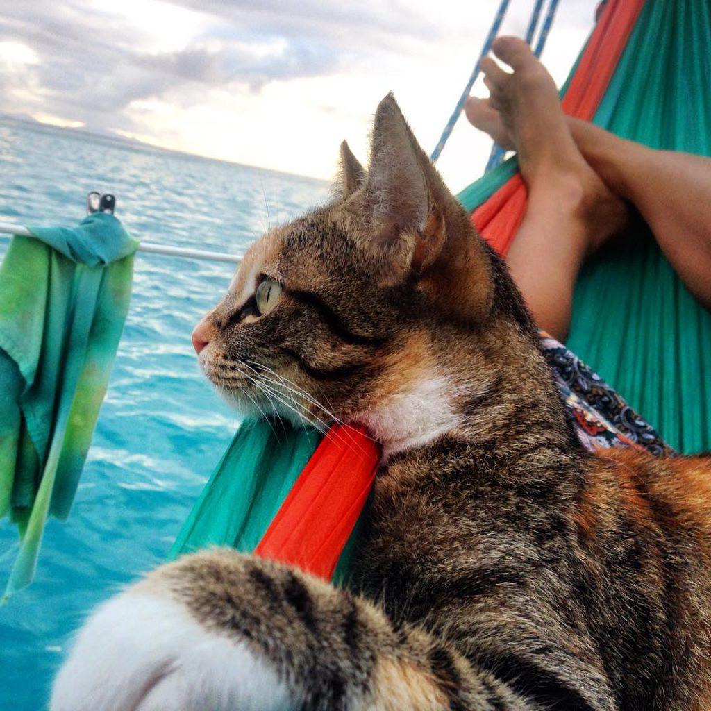 belle histoire de chat sur son bateau