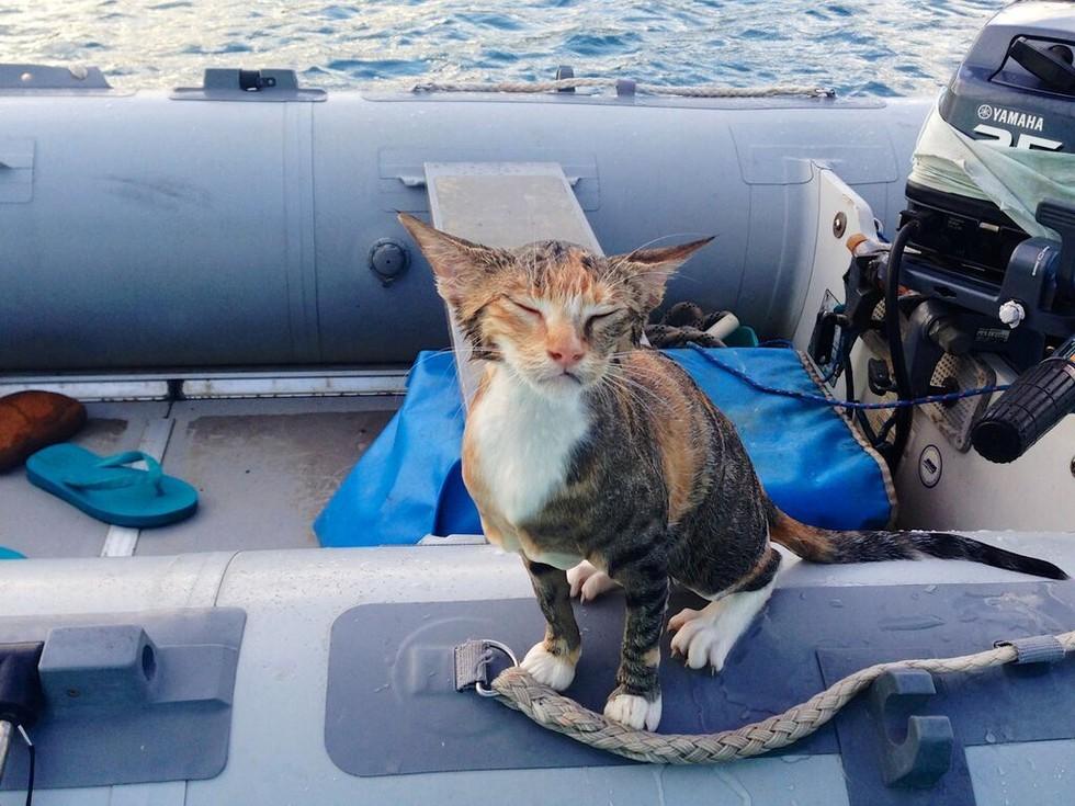 la belle histoire de chat sur un bateau