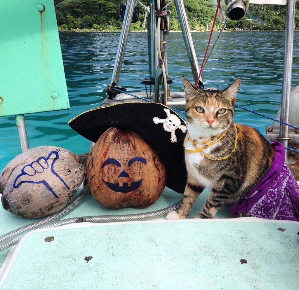 belle histoire de chat amelia