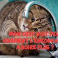 mon chat refuse de boire ou mon chat boit peu