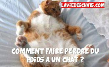 faire maigrir un chat