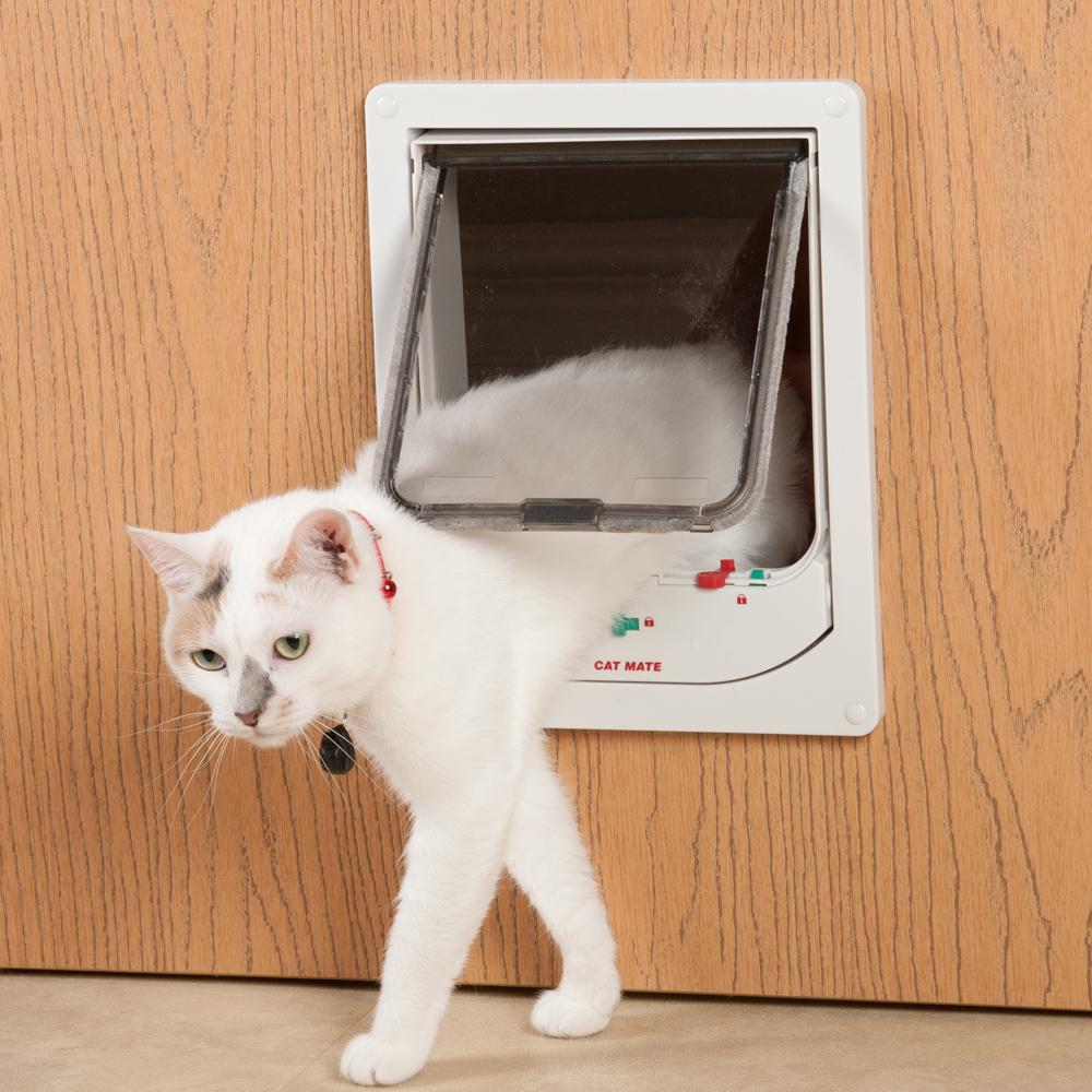 mon chat refuse la chati re comment faire la vie des chats. Black Bedroom Furniture Sets. Home Design Ideas
