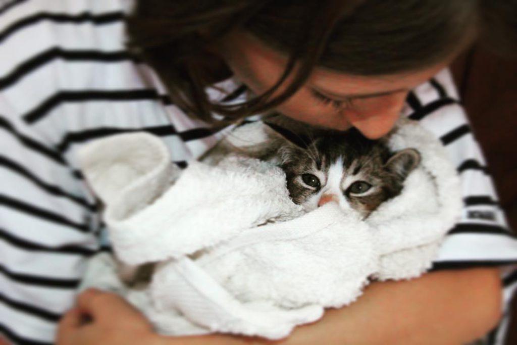 chaton dans les bras de maîtresse